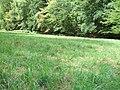 Forbach am Waldrand an Waldwiese mit Herbstzeitlosen.jpg