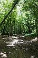 Forest @ Roc de Chère @ Talloires (35606180156).jpg