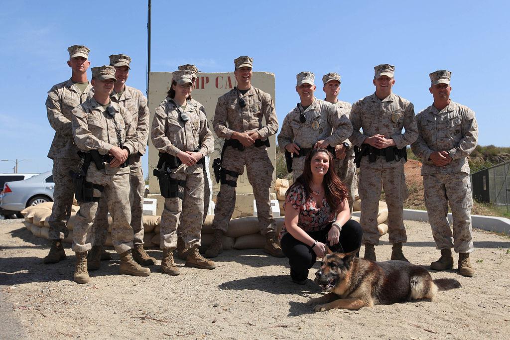 Adopt Police Dog Dropouts Texas
