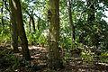 Forty Hall garden trees, Enfield, London, England.jpg