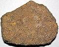 Fossiliferous sandstone (Allensville Member, Logan Formation, Lower Mississippian; Sugar Loaf Hill, Granville, Ohio, USA) 1 (46849499141).jpg
