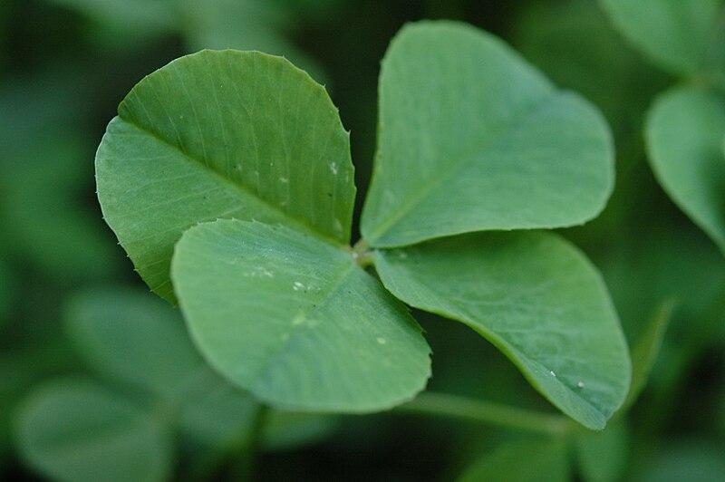 Файл four leaf clover 068