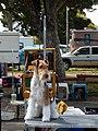 Fox Terrier at Dog Show.jpg