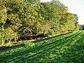 Frithsden Beeches - geograph.org.uk - 268169.jpg