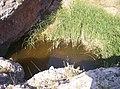 Fuente Charco del Pavo, en el Barranco del Hocino.jpg