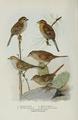 Fuertes Bird Lore.png