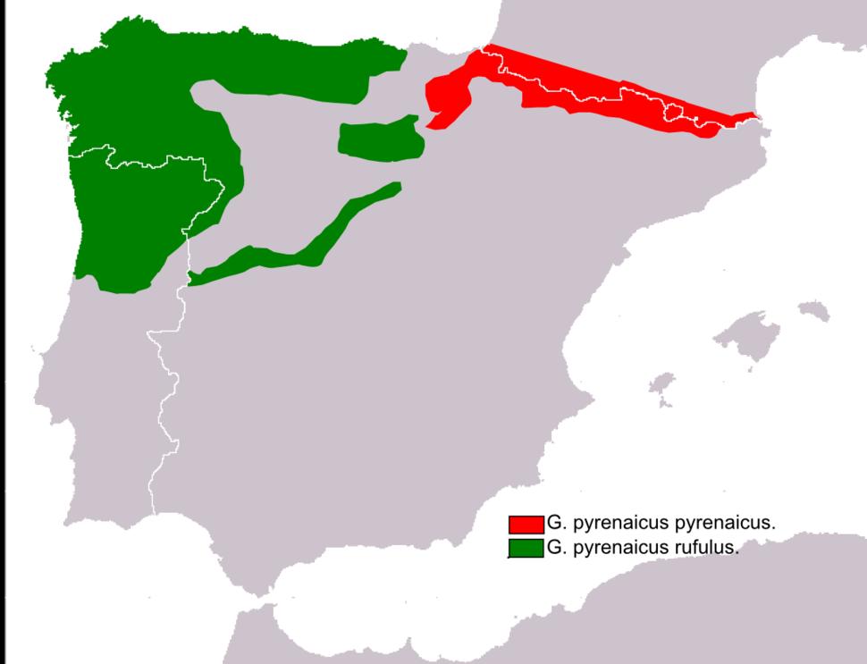 Distribución Galemys pirenaicus