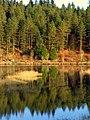 Galloway Forest Park - panoramio - Graham Thomson (2).jpg