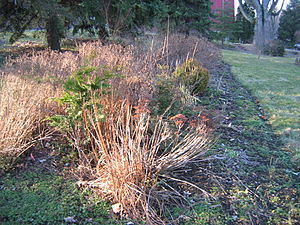 A garden bed before spring cleanup