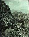 Garden in Madeira, by Sarah Angelina Acland, c.1910 (7).jpg