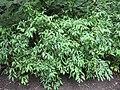 Gardenology.org-IMG 2112 rbgs11jan.jpg