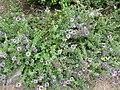 Gardenology.org-IMG 2750 rbgs11jan.jpg
