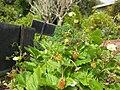 Gardenology.org-IMG 5311 hunt0904.jpg