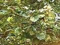 Gardenology.org-IMG 7429 qsbg11mar.jpg