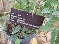 Gardenology.org-IMG 7991 qsbg11mar.jpg