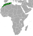 Gazella cuvieri.png
