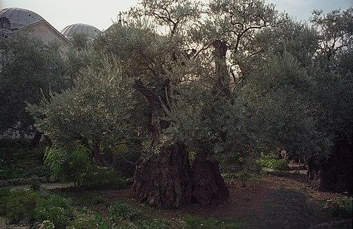 Gethsemane(js)