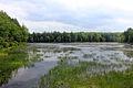 Gfp-pennsylvania-promised-land-state-park-wetlands.jpg