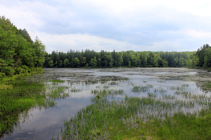 File:Gfp-pennsylvania-promised-land-state-park-wetlands.jpg