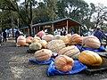 Giant Pumpkin Festival 10.20.07 007.jpg