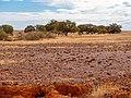 Gibber Country, Diamantina National Park, Queensland, Australia.jpg
