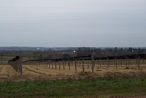 A ginseng field in Marathon County, Wisconsin ...