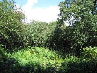 Glebelands Local Nature Reserve - Glebelands