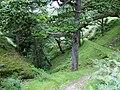 Gorge at Nant Lluest Fach, Cwm Doethie, Ceredigion - geograph.org.uk - 511231.jpg