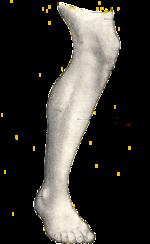 musculos de la pierna izquierda