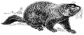 Ground hog (PSF).png