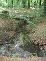 Guteborn, der Kühle Born aufwärts vom Weg am Schlossteich, Nordansicht, Spätfrühling, 02.jpg