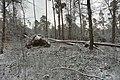 Hövelhofer Wald - Sturmschäden - 3.jpg