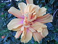 HK 元朗公園 Yuen Long Park 32 flower.jpg