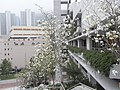 HK 鑽石山仰念堂 Diamond Hill Yeung Nim Hall view 鑽石山殯儀館 Po Kong Village Road Fog day.jpg