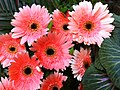 HK Central flowers City Hall art expo pink pattern Nov-2012.JPG