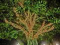 HK Disneyland 迎樂道 Park Promenade night garden tree lighting Oct-2013.JPG