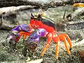 Halloween crab.jpg