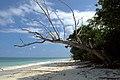 Havelock Island, Andaman Sea, Andaman Islands.jpg