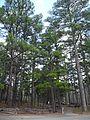 Hawn State Park 24mar12 18.jpg
