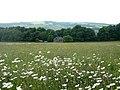 Hay Wood, nr. Grouse Inn, Longshaw, Derbyshire - geograph.org.uk - 1915688.jpg