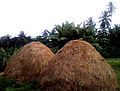 Hay at Rajula Tallavalasa in Visakhapatnam district.jpg