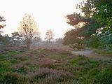 Heide by Bakkefean