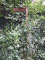 Helsby Hill (71).JPG