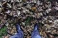Herbst in Halle Saale - auf dem Universitätsplatz aufgenommen... - panoramio.jpg
