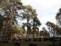 Himanka Cemetery.JPG