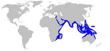 World map with blue shading around the periphery of the Indian Ocean, including through the Red Sea to the eastern extreme of the Mediterranean, and eastward to Indonesia and New Guinea, north to Taiwan and south to northern Australia