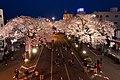 Hitachi Sakura Festival, Ibaraki 21.jpg