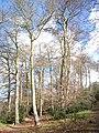 Hogback Wood - geograph.org.uk - 150582.jpg