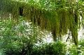 Hoh Rain Forest (Air Fern).jpg