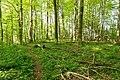 Horn-Bad Meinberg - 2015-05-10 - LIP-028 Silberbachtal mit Ziegenberg (61).jpg